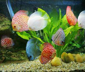 Đặt bể cá mang thịnh vượng vào nhà