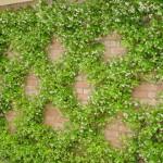 Bức tường xanh trong phong thủy